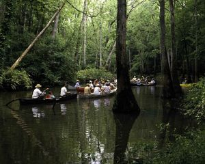 Canoes_on_water_in_swamp_area